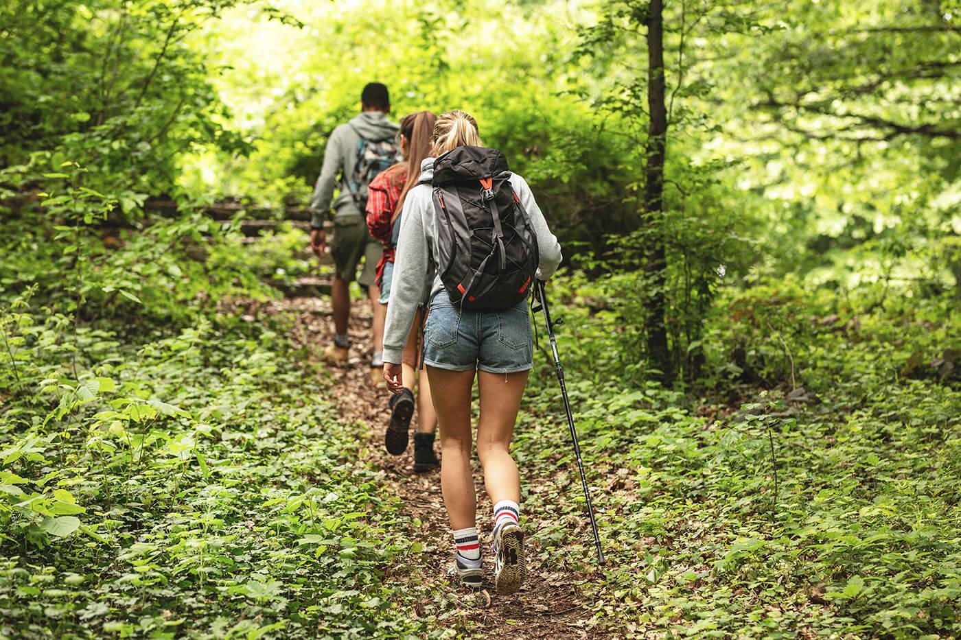 Wandergruppe im Wald - Fasten und wandern